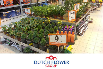Dutch Flower Group